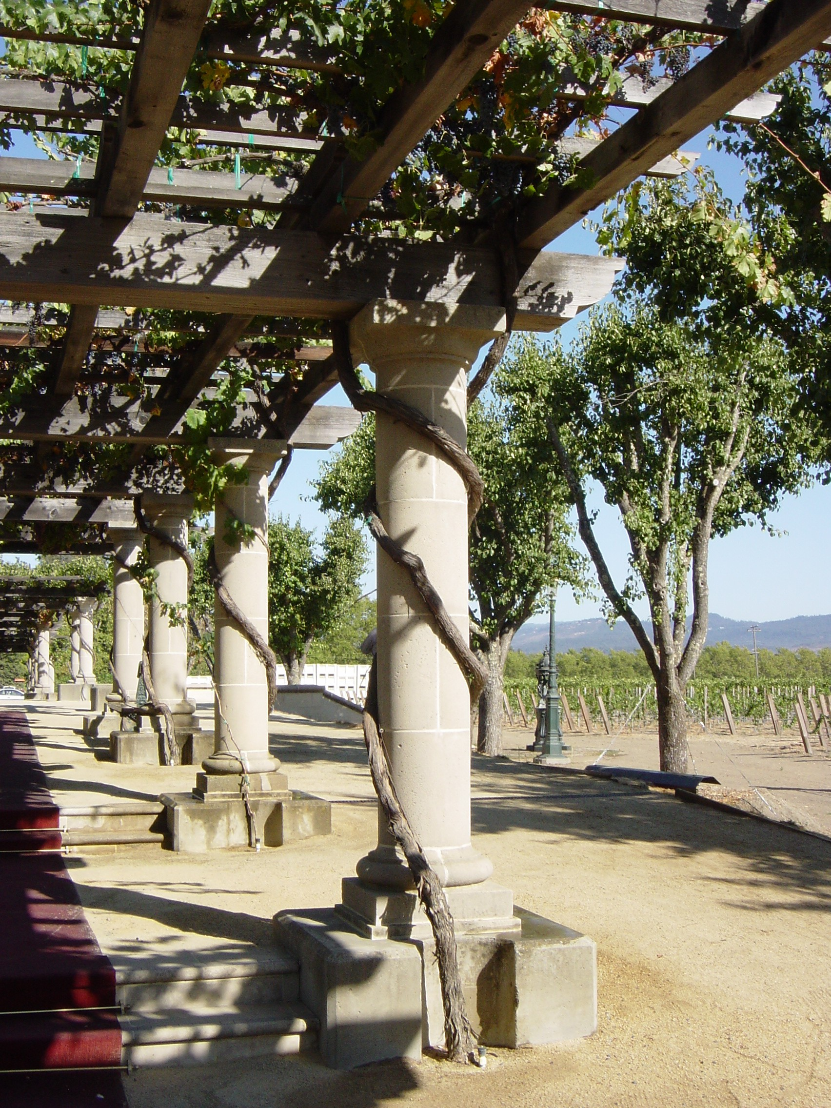 Coppola Grape Arbor